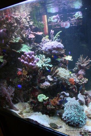 seitenansicht-meerwasser-wuerfel