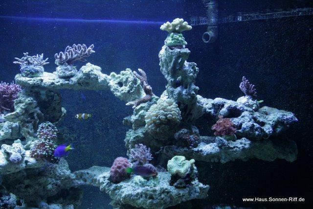 meerwasser-sonnenriff5