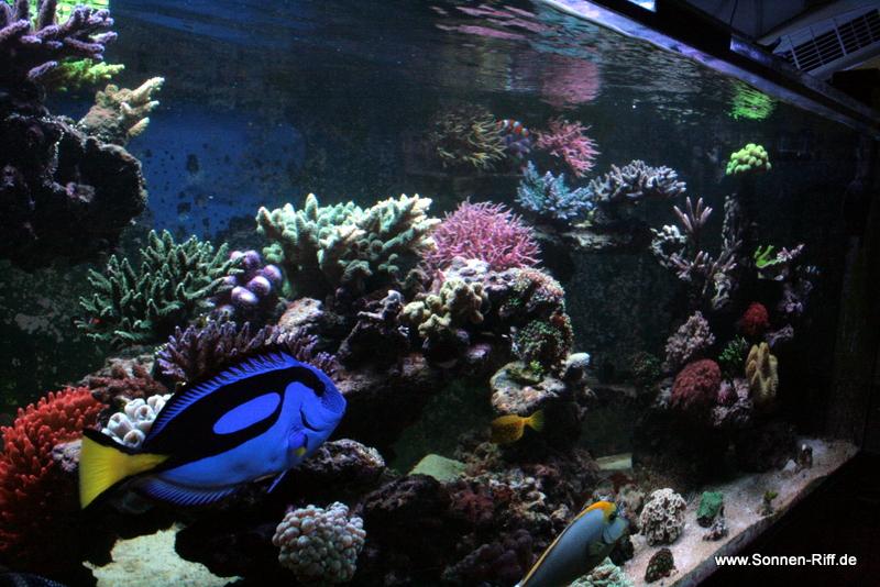 aquarium-seite