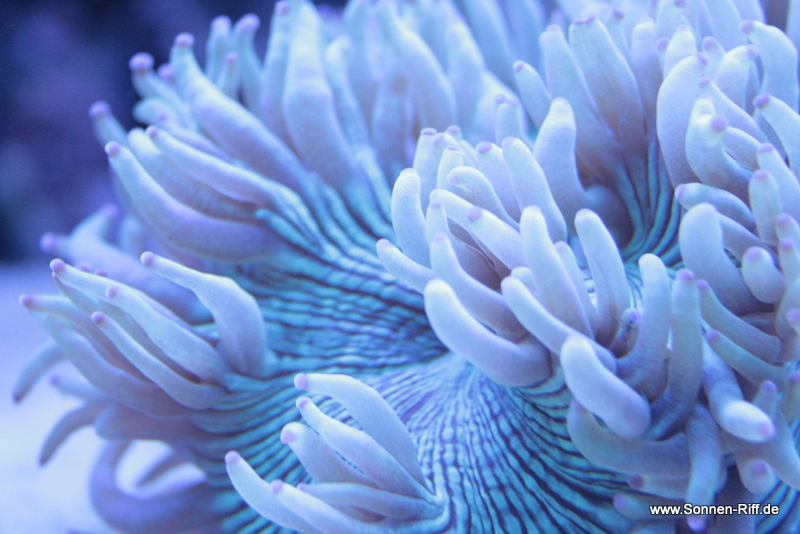 koralle-wunder-nah