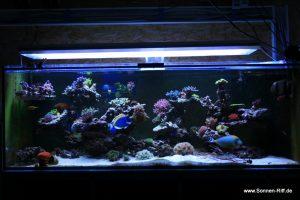 Bilder 29.11.2011